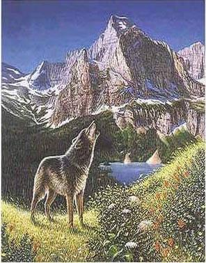 optical illusion many illusions quiz hard wolves nerdtests test eye