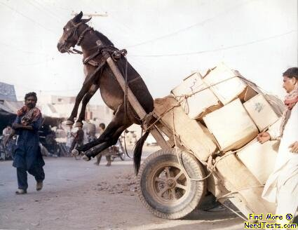 NerdTests.com - Overloaded Donkey