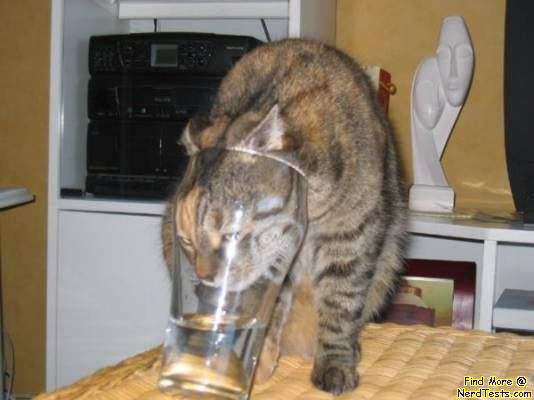 NerdTests.com - Cat stuck in glass