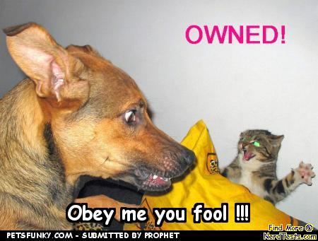 Obey me you fool!