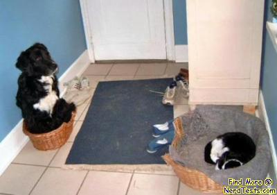 NerdTests.com - Cat Pwns Dog
