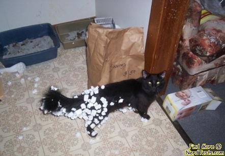 NerdTests.com - Staticy Cat