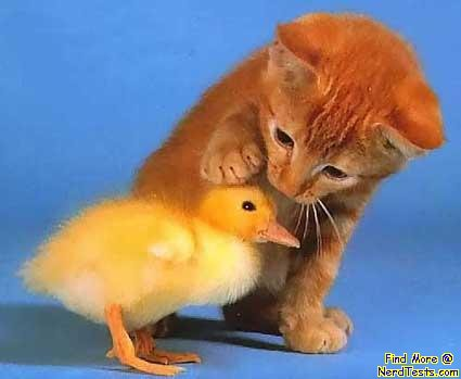 NerdTests.com - Chick and a Kitten