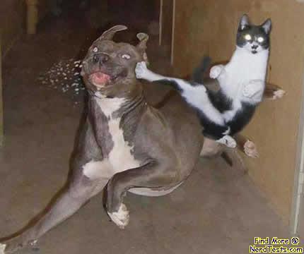 NerdTests.com - anilmal kung-fu