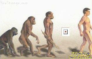 NerdTests.com - Evolution